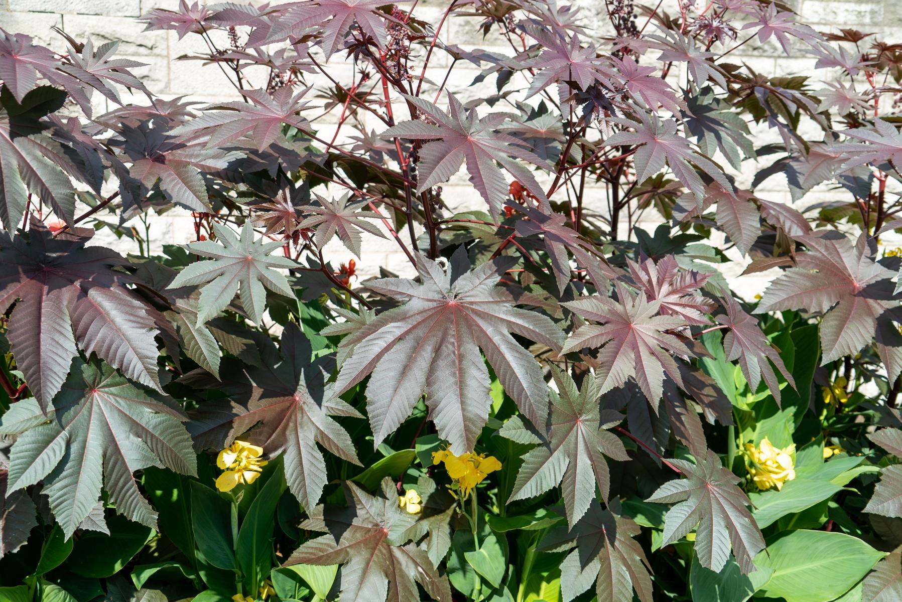 Flora on Niagara patio
