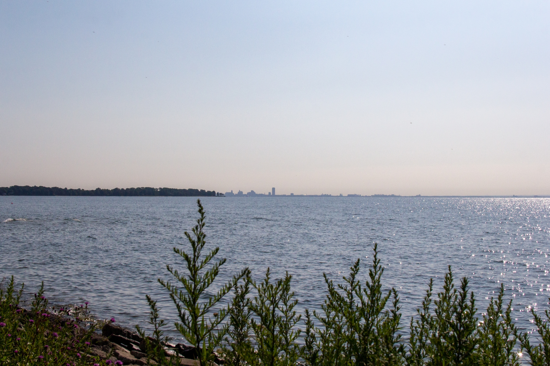 Buffalo in the distance